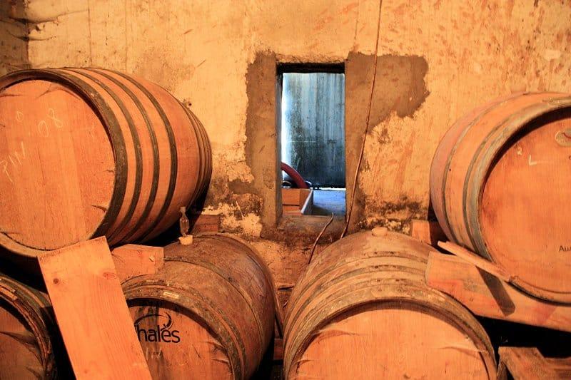 Swartland Wine Making at Fynbos Estate